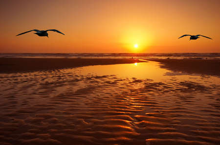 beautiful landscape with seagulls and sunset photo