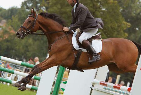 horse jumping: A beautiful horse jumping