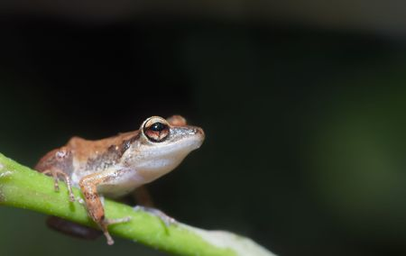 cute little tree frog with room to write photo