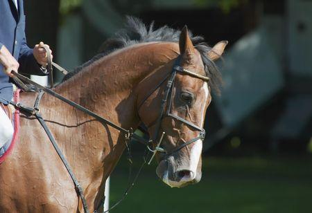 A Beautiful horse photo