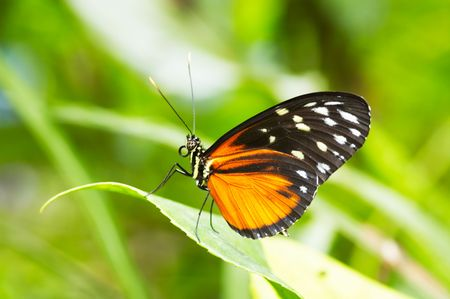 A beautiful butterfly photo