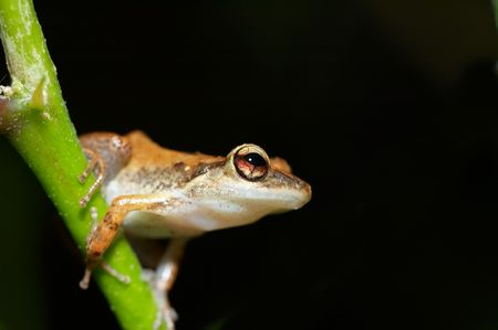 cute frog  on a tree photo