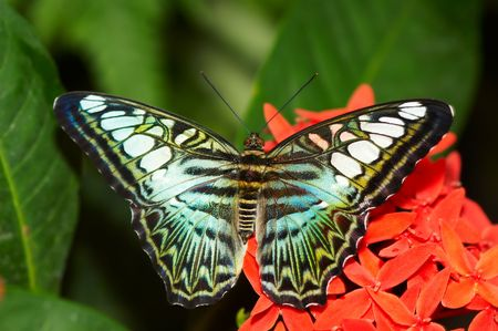 A beautiful butterfly Stock Photo - 511755