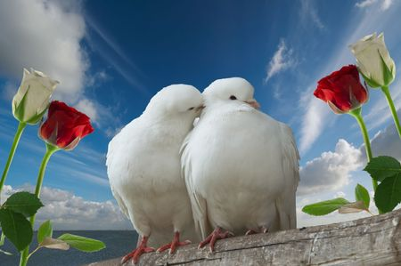 aves: two love birds and roses against blue sky