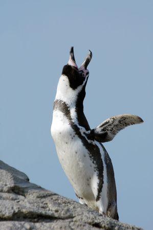 cute penguin against a blue sky photo