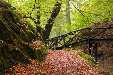 A path through the forest in autumn photo