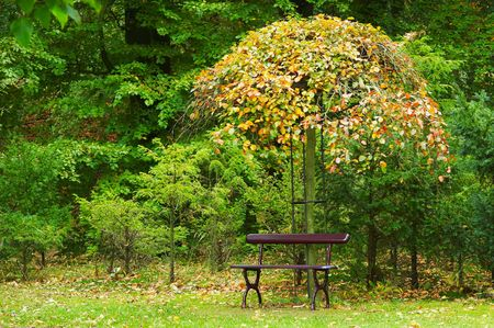 beautiful autumn colors in the park photo