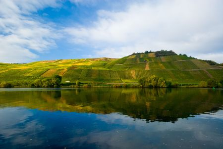 mosel: vineyards reflecting in the mosel river, germany