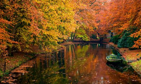 autumn colors in the forest Stock Photo - 2033514