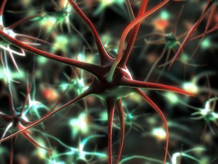 motor neuron: neuron cell