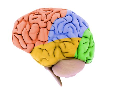 brainy: human brain