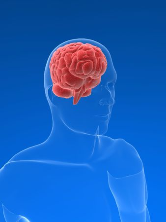 human brain Stock Photo - 511652