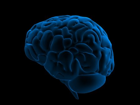 cerebra: