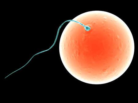 membrane cellulaire: sperme et l'ovule