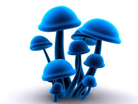 magic mushrooms photo