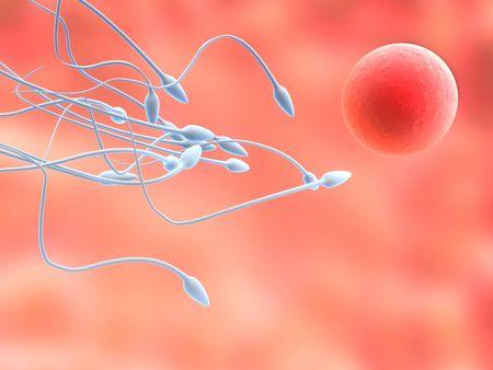 reproductive technology: Espermatozoides y �vulo