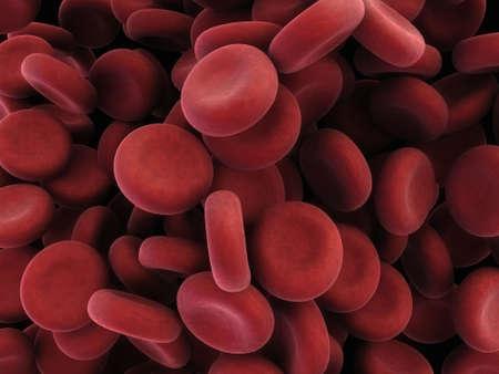 veine humaine: Cellules sanguines