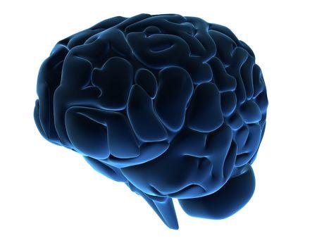 cerebra: brain