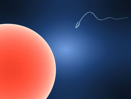conceived: sperms
