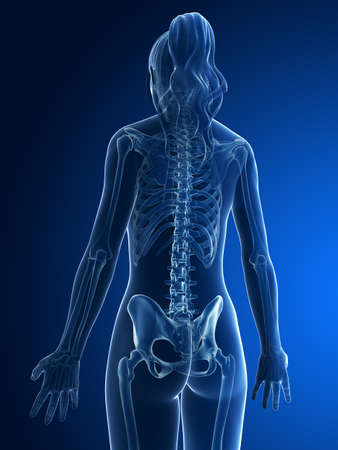 columna vertebral humana: 3d rindi� la ilustraci�n m�dica - back esquel�tico