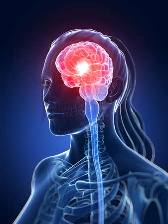 central cord: 3d rendered medical illustration - female brain
