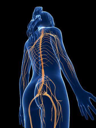 3d rendered medical illustration - female nerves Stock Illustration - 22584154