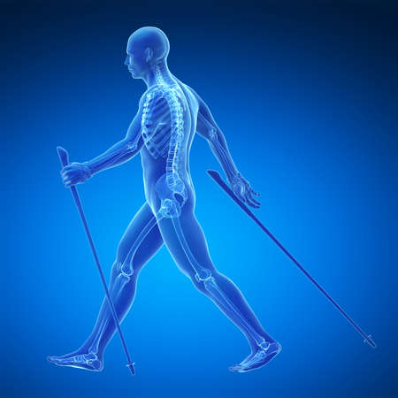 guy with walking stick: 3d rendered medical illustration - nordic walking