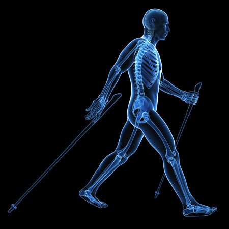 3d rendered medical illustration - nordic walking illustration