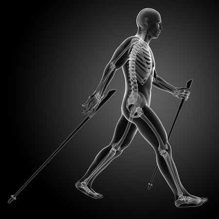 human bones: 3d rendered medical illustration - nordic walking