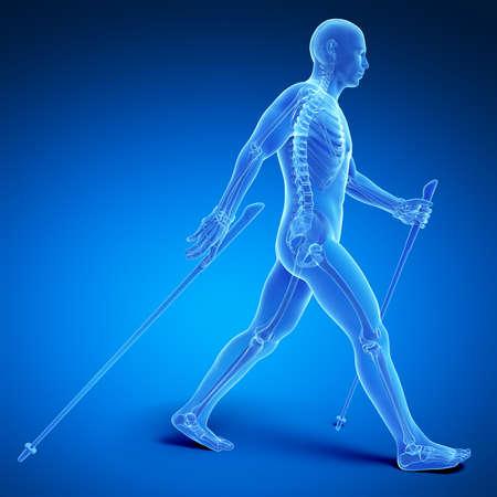trail running: 3d rendered medical illustration - nordic walking