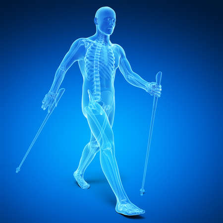 nordic walking: 3d rendered medical illustration - nordic walking