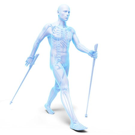 walking stick: 3d rendered medical illustration - nordic walking