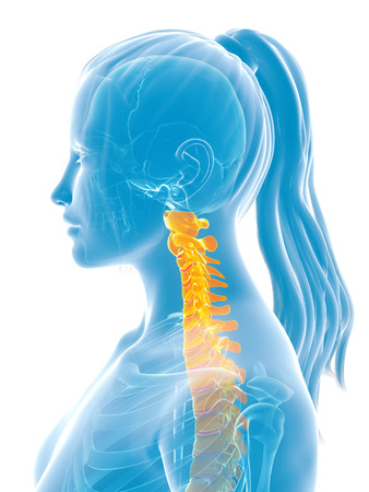 chiropractor: 3d rendered medical illustration - painful spine