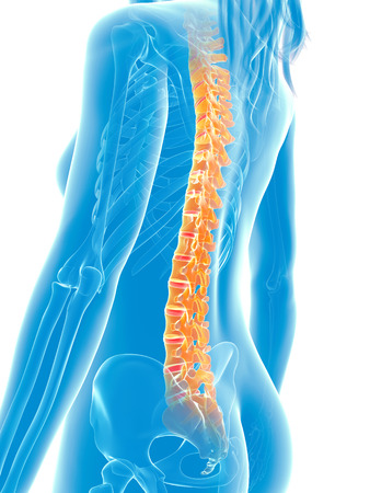 woman back pain: 3d rendered medical illustration - painful spine