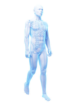 bone anatomy: 3d rendered medical illustration - walking guy Stock Photo