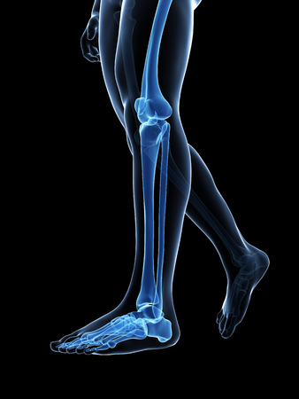 x ray: 3d rendered medical illustration - bones of the legs