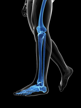 radiation therapy: 3d rendered medical illustration - bones of the legs