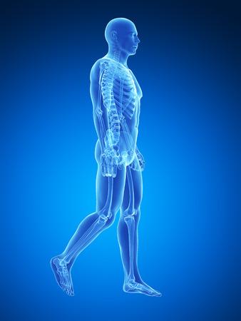radiacion: 3d rindió la ilustración médica - hombre caminando Foto de archivo