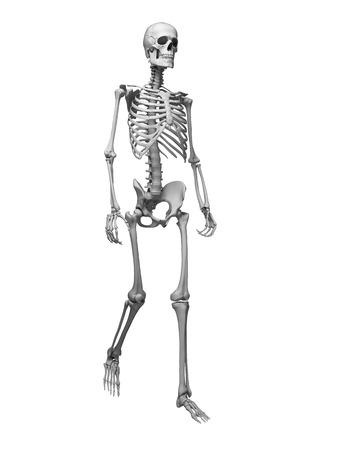 huesos humanos: 3d rindió la ilustración médica - esqueleto andante