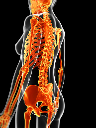 skeleton anatomy: 3d rendered illustration of the female skeleton Stock Photo