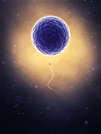 3d rendered illustration of the fertilization illustration