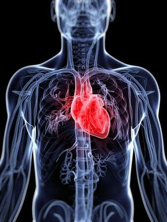 corazon humano: 3d rindió la ilustración del sistema vascular