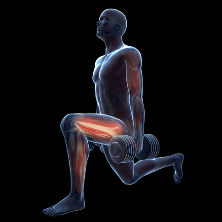 anatomy muscle: 3d rendered illustration of a man doing a leg workout