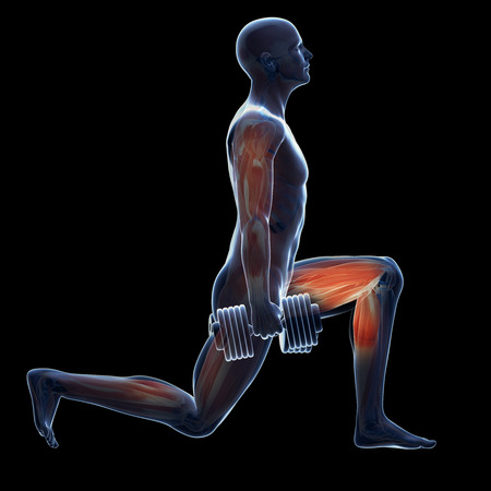 muscle: 3d rendered illustration of a man doing a leg workout