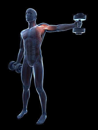 shoulder anatomy: 3d rendered illustration of a guy doing a shoulder workout Stock Photo
