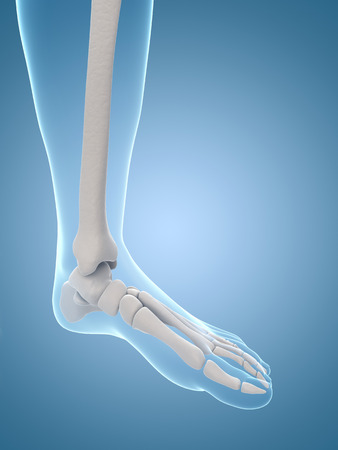 medical illustration of the skeletal foot illustration