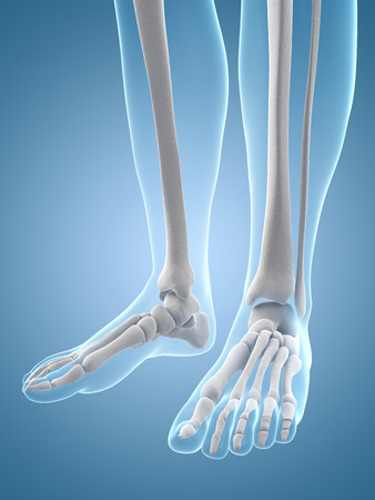 medical illustration of the foot bones illustration