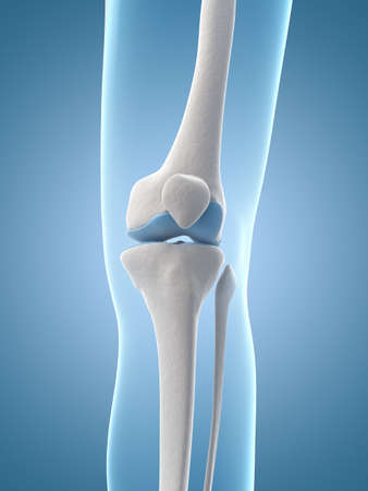 medical illustration of the knee illustration