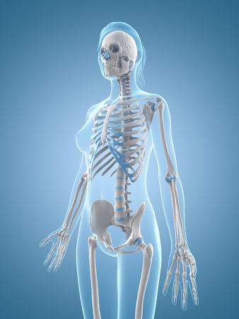 medical illustration of the female skeleton illustration