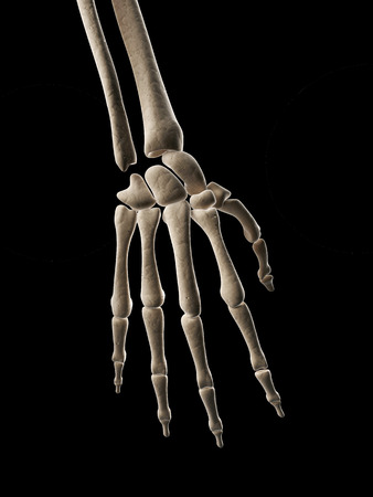 medical illustration of the hand bones illustration